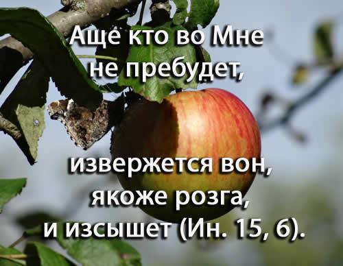 старообрядцы яблоко.jpg